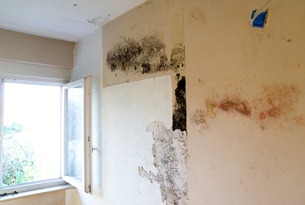 Property and Housing repairs